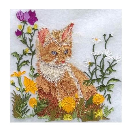 kotě v květech