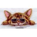 kotě s brýlemi