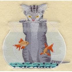 kotě a akvárium