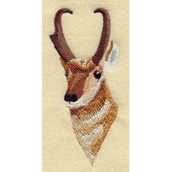 antilopa skákavá