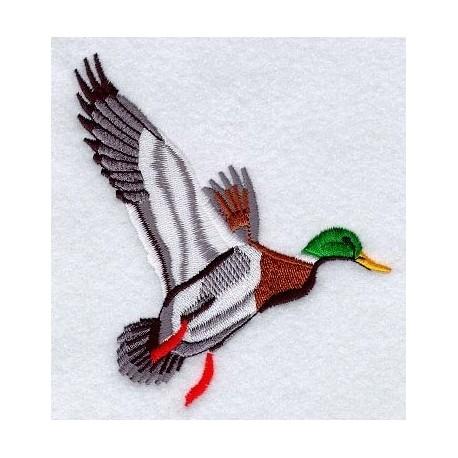 divoká kachna v letu