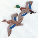 divoké kachny v letu