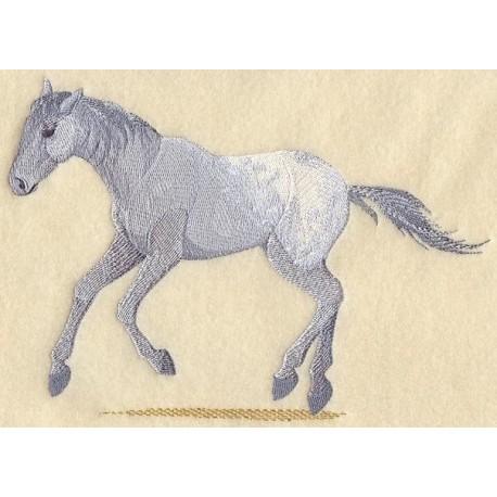 kůň plemene Appaloosa