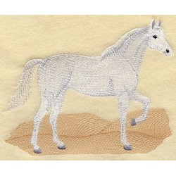 kůň arab - arabský plnokrevník
