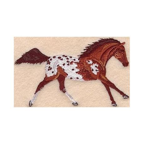 kůň hnědák plemene Appaloosa