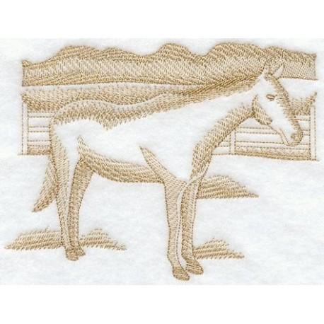 kůň - obys