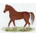 kůň Morgan Horse
