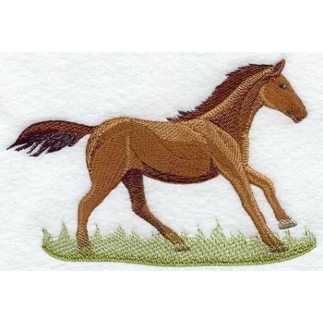 jezdecký kůň Quarter Horse