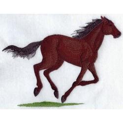 Thoroughbred - anglický plnokrevník