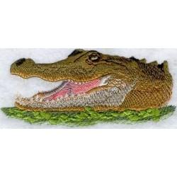 americký alligator