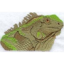 zelený leguán