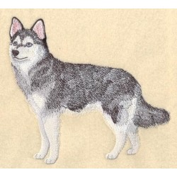 malý pes z Aljašky
