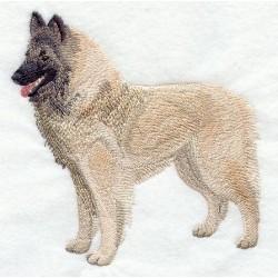 belgický ovčák (Tervuren)