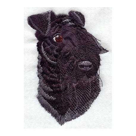 Kerry Blue Terier - hlava