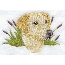 Labradorský retrívr - hlava