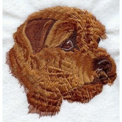 Norfolk Terrier - hlava