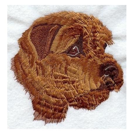 Norfolk Terrier - hlava
