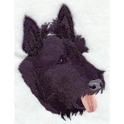 skotský terier - hlava
