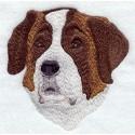 Svatobernarský pes, bernardýn - hlava