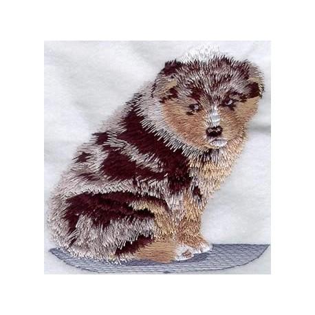 Australský ovčák - štěně
