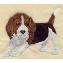 bígl - štěně