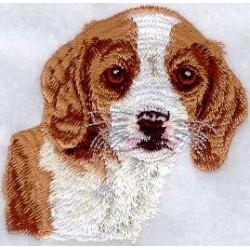 bígl - štěně - hlava