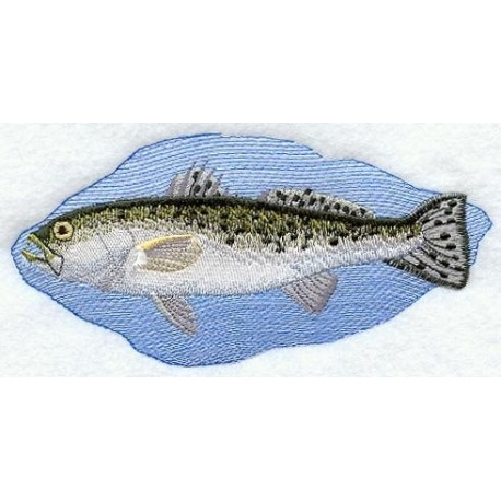 ryba - smuha skvrnitá
