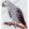 papoušek - africký šedý