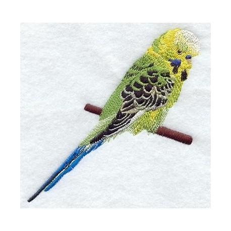 andulka - papoušek