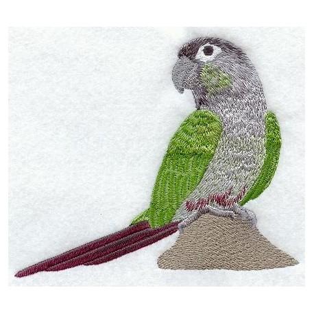 papoušek - pyrura zelenolící