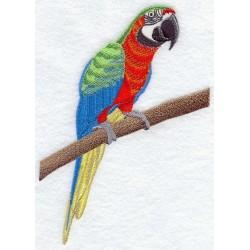 papoušek ara harlekýn