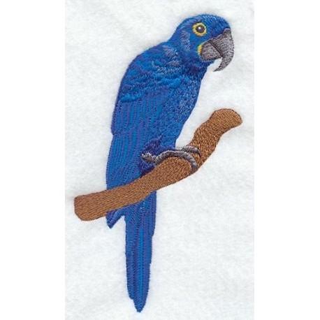 papoušek ara hyacintový