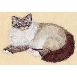 kočka Birman
