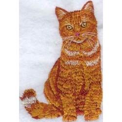 britská oranžová mourovatá kočka