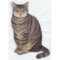 hnědá mourovatá kočka