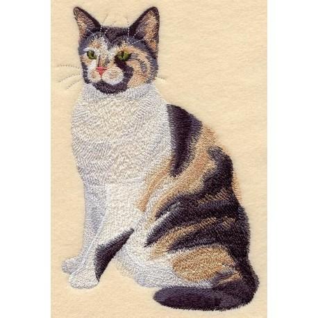 kočka Calico