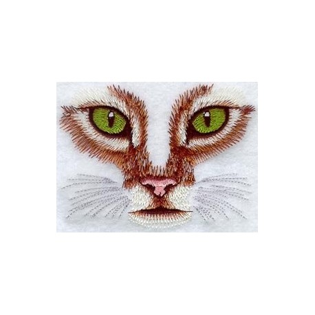 pohled kočky