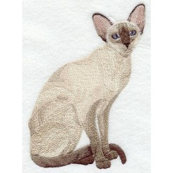 čokoládová siamská kočka
