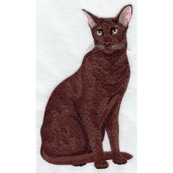 kočka Havana Brown