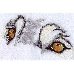 oči vlka
