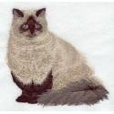 kočka Himalayan