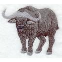 africký buvol