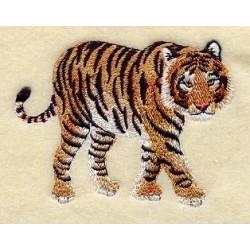 bengálský tygr
