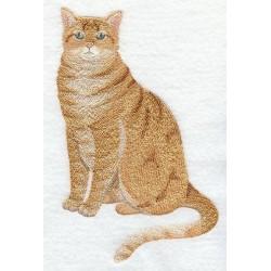 kočka Ozzie