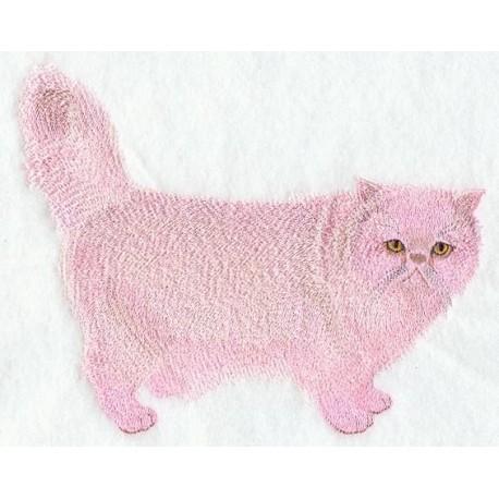 kočka Persian