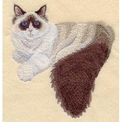 kočka Ragdoll