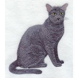 kočka Russian Blue
