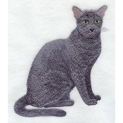 kočka Russian Blue