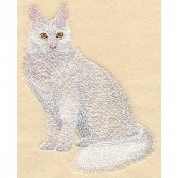 turecká angorská kočka