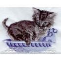 koupající se kotě